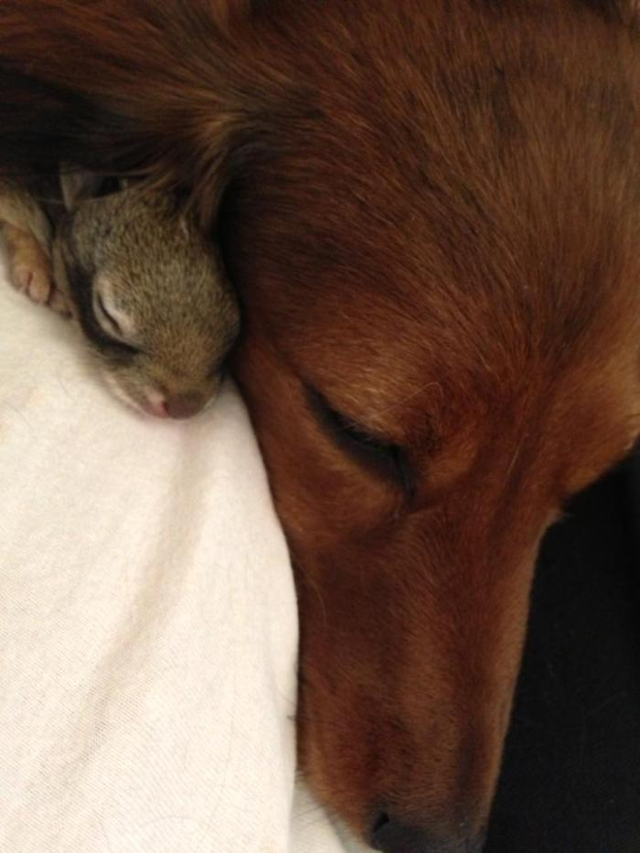 penny&bunny